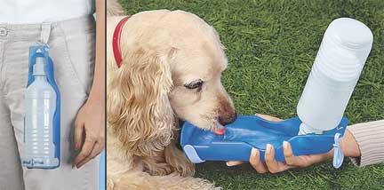 Portable Dog Dish