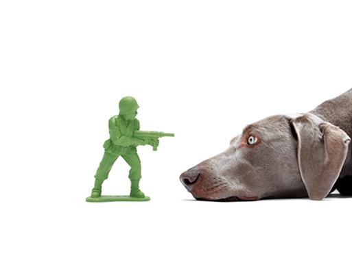 Dogface by DocaPet