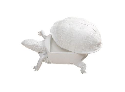 Box Turtle Box
