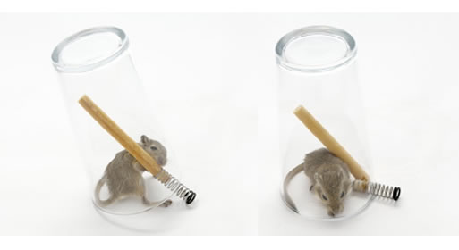 Mouse in a Pint (Non-lethal mouse trap) by Roger Arquer