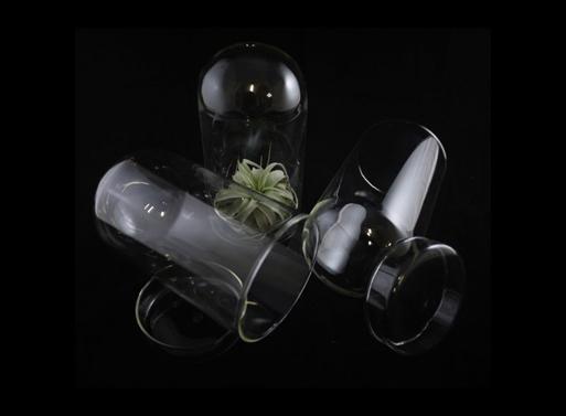 Petri Dish with Dome Cloche