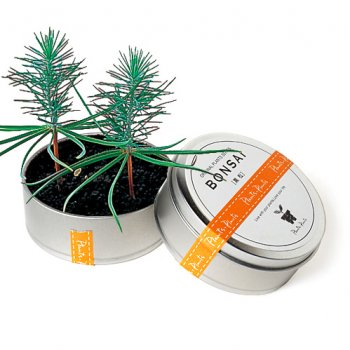 Bonsai Tree in a Can