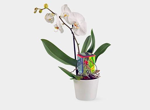 DIY Thirsty Plant