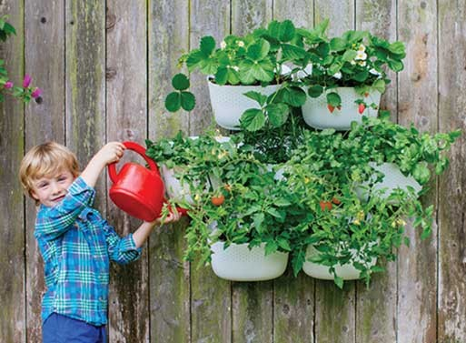 Living Wall Planter 2