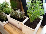 Patch Herb Planter