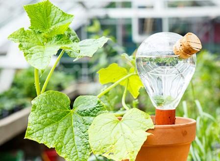 Waterworks Bulb