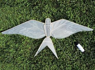 Swallow and Crane Kite