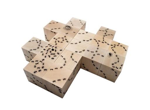 Antics Ant Blocks