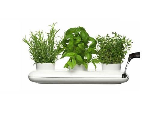 Trio Herb Pot