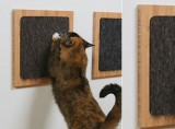 Itch Cat Scratcher