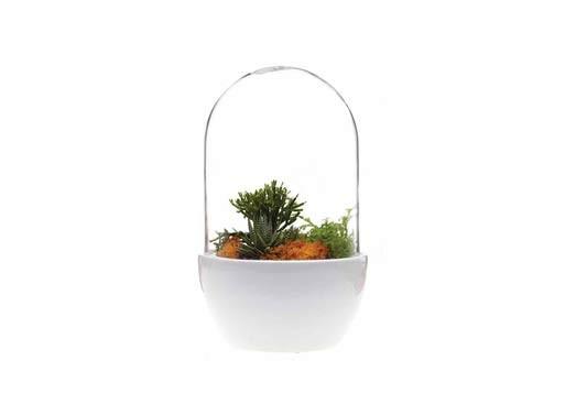 Pill Terrarium