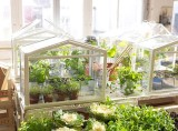 Socker Greenhouse