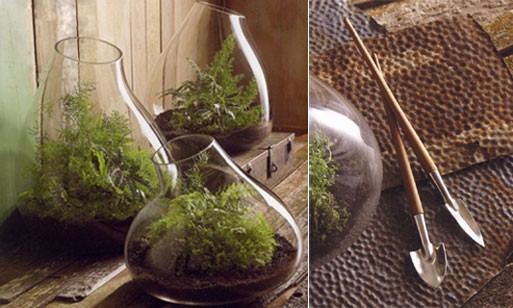 Recycled Glass Bubble Terrariums