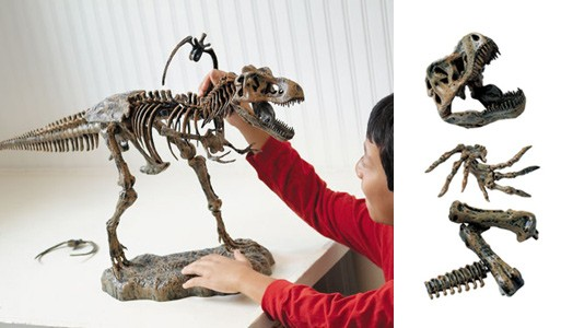 Discovery 3-Foot Ultimate T-Rex Skeleton