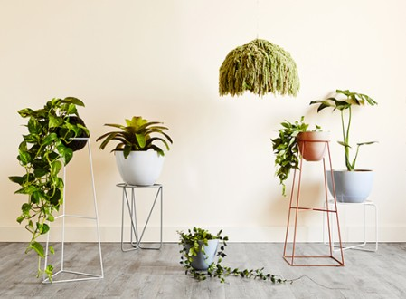 Ivy Muse Plant Stands