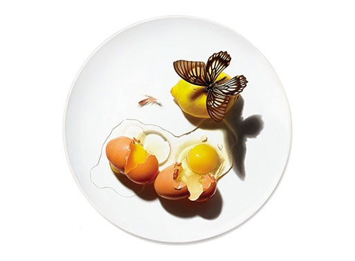 DISH Plate Series