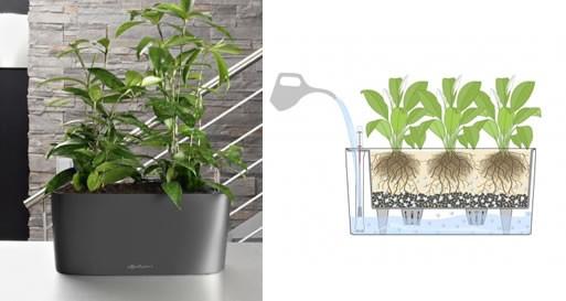 Delta 20 All-Inclusive Windowsill Planter by Lechuza