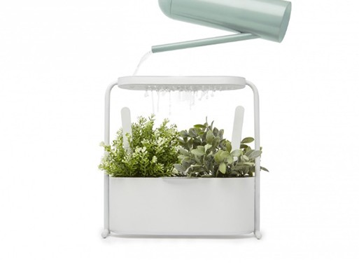 Giardino White