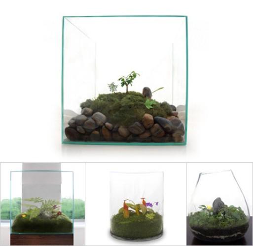 JeffreyJamesModern terrariums